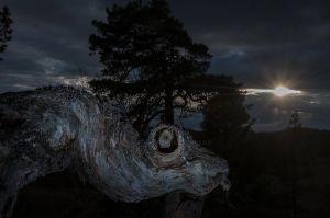 Dinosaur i skogen