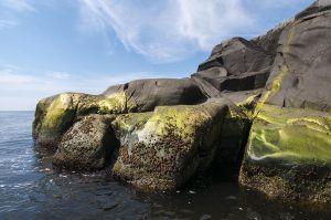 Grønt i vannkanten