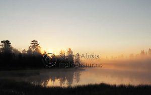 morgensol_ved_innsjø_dalarna_960_flat.jpg