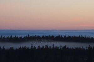 Skog og tåkeskyer over Ringsakerfjella