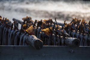 Tørrfisk på gjel i Lofoten